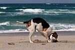 Dog Listens to Sea