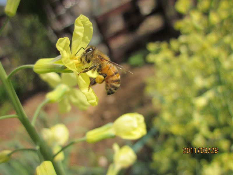 Janet Bee 01-19-12