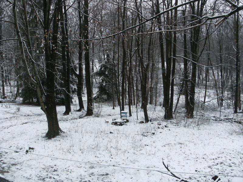 Snowy Wood4 01-28-12